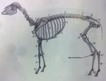 animal 2 (2)